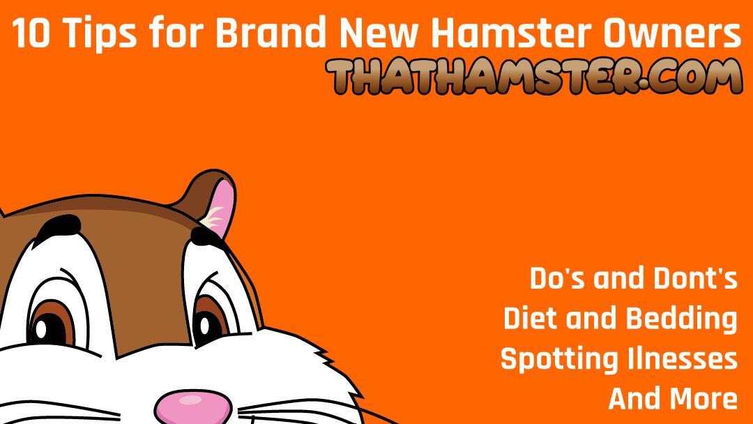 10 Tips for Brand New Hamster Owners