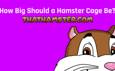 How Big Should a Hamster Cage Be?